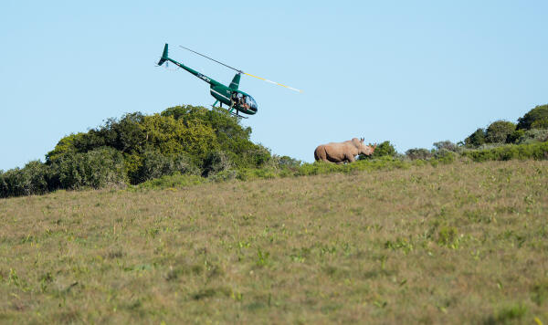 Dr Fowlds darts the Rhino from the air.